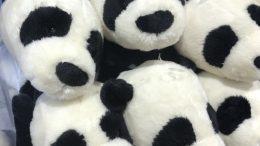 Panda stuffed toys