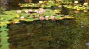 Lily pond image